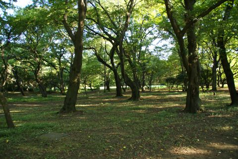 kinuta_park.jpg