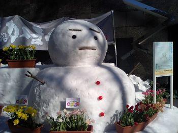 omotesando_snowboy.jpg
